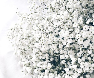 aesthetic, flowers, and simple image