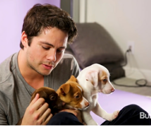 puppies, dylan o'brien, and dylan obrien image