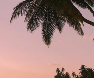 wallpaper, nature, and palm tree image