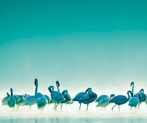 flamingo, blue, and photography image
