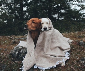 adorable, sweet, and dogs image