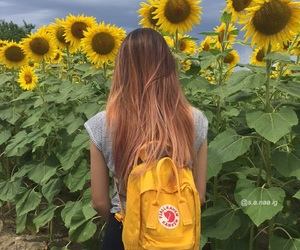 aesthetic, inspiration, and sunflowers image