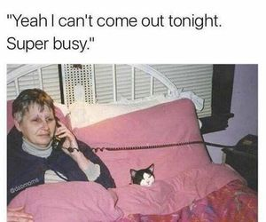 funny, cat, and busy image