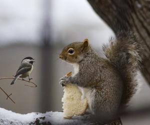 animals, bird, and photography image