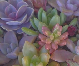 plants, succulents, and tumblr image
