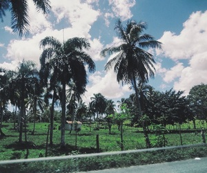 blue, green, and palms image