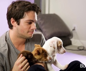 puppy, dylan o'brien, and actor image