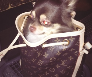 baby, germany, and Louis Vuitton image
