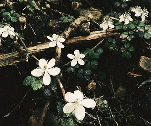 flowers, nature, and aesthetic image