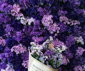 flowers, purple, and beautiful image