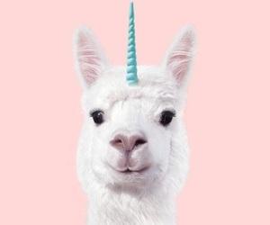 art, llama, and cute image