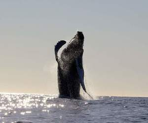 Animales, naturaleza, and whales image