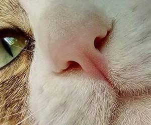 eyes, gato, and bigotes image