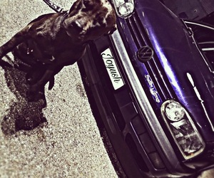 beast, dog, and vw image
