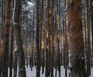 winter, christmas, and forest image