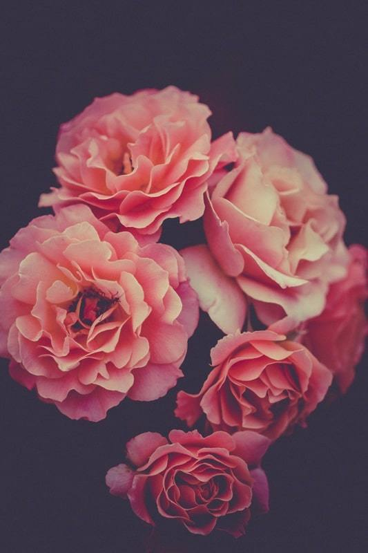flowers, article, and pink image