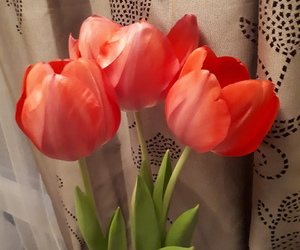 flower, tulipe, and red image