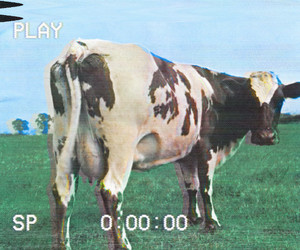 Pink Floyd, vhs, and atom heart mother image