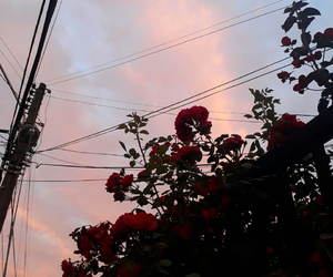 aesthetic and rose image