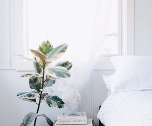 plants, white, and bed image