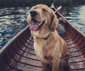 dog, travel, and relax image