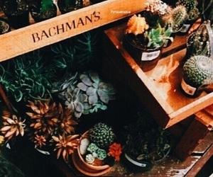 plants, orange, and green image