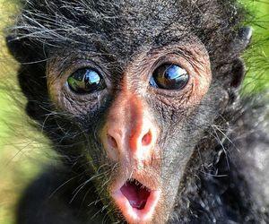 animals, baby animals, and monkey image