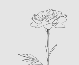 flower, art, and draw image