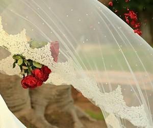 عروس image
