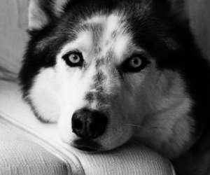 black and white, dogs, and love it image