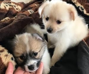 puppy+puppies