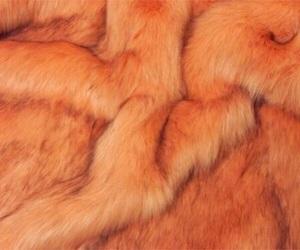 orange, aesthetic, and theme image