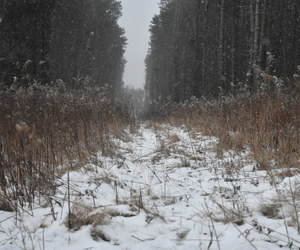 forrest, snow, and valley image