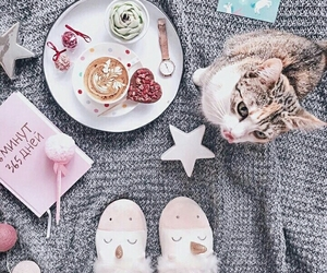 cat, Cookies, and morning image