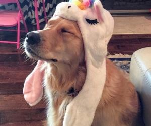 cute, animal, and unicorn image