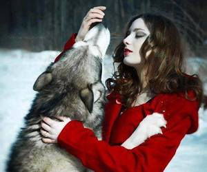 wolf, red, and winter image