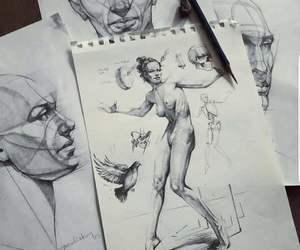 anathomy, art, and bird image