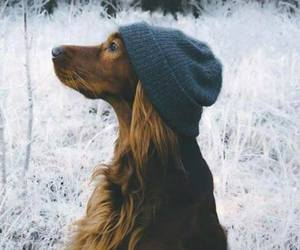 dog, cute, and winter image