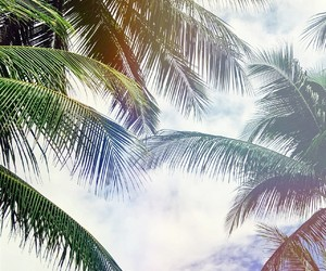 thailand, palm trees, and travel image