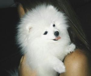 dog, pet, and littlepet image