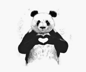 panda, love, and white_black image