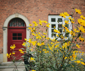 flowers, nature, and door image