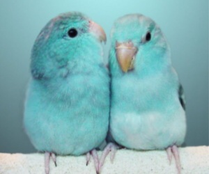 couple, love, and adorable image