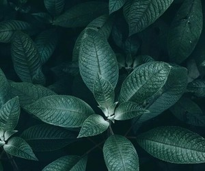 green, photography, and nature image