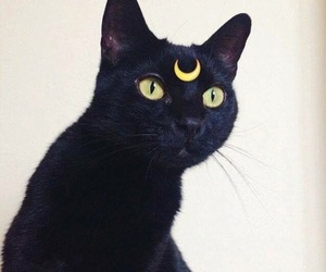 black, cat, and sailor moon image