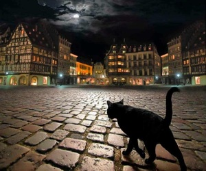 cat, night, and moon image