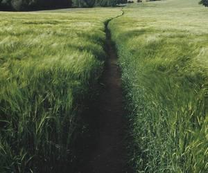 green, nature, and way image