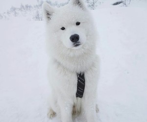 animal, dog, and nieve image