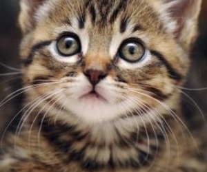 cats, cuteness, and kittens image