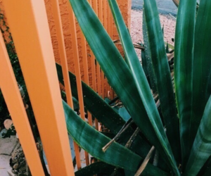 orange, green, and plants image